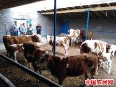 持续开展强化督查,助推阿克苏市现代畜牧业